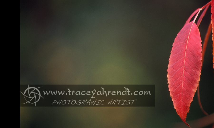 www.traceyahrendt.com_nature1
