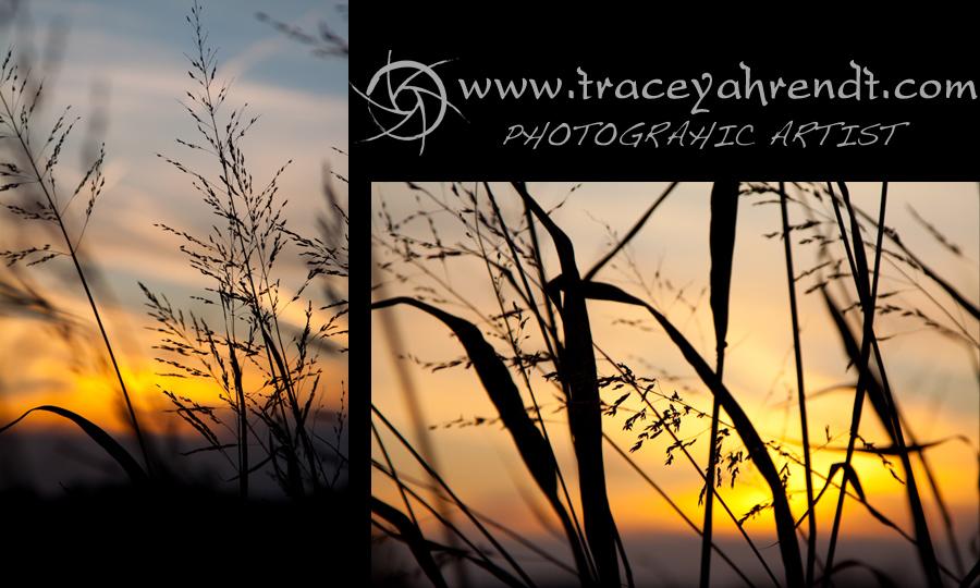 www.traceyahrendt.com_nature7