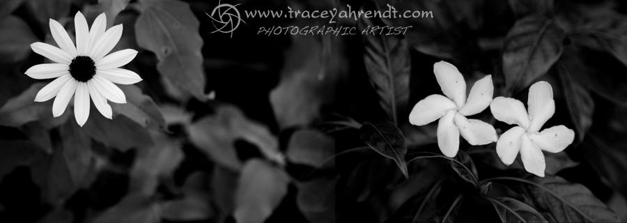 www.traceyahrendt.com_family_portrait6